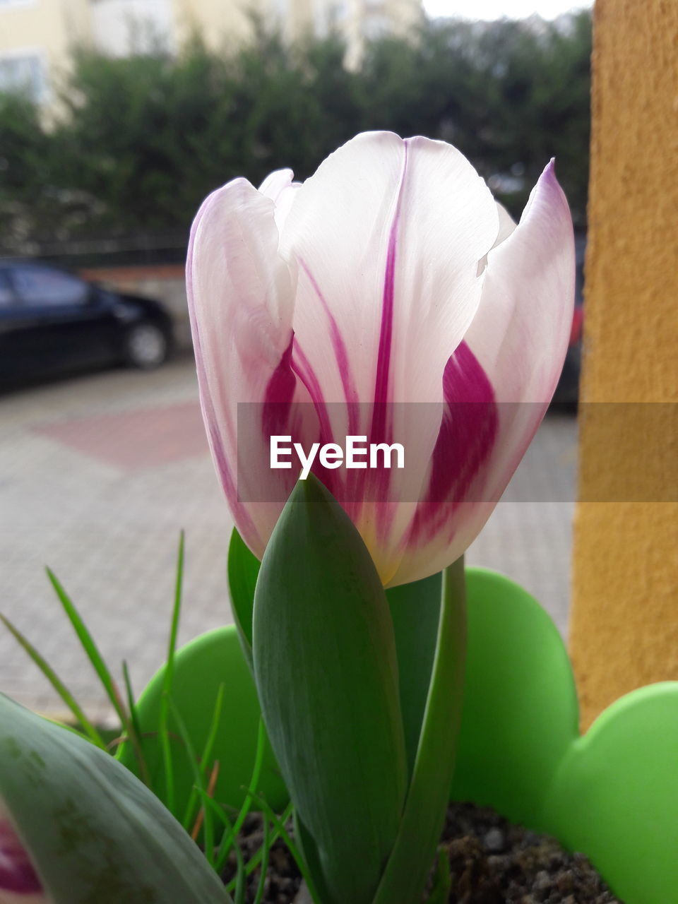 flower, petal, fragility, growth, nature, beauty in nature, freshness, pink color, flower head, close-up, plant, focus on foreground, day, no people, outdoors, blooming