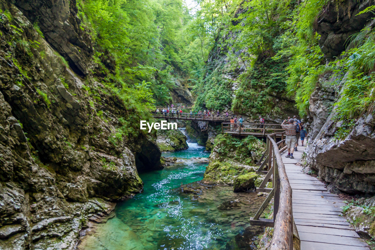 water, bridge, bridge - man made structure, tree, connection, plant, forest, river, built structure, nature, land, transportation, rock, mountain, architecture, beauty in nature, scenics - nature, day, rock - object, no people, footbridge, outdoors, flowing water, flowing, stream - flowing water