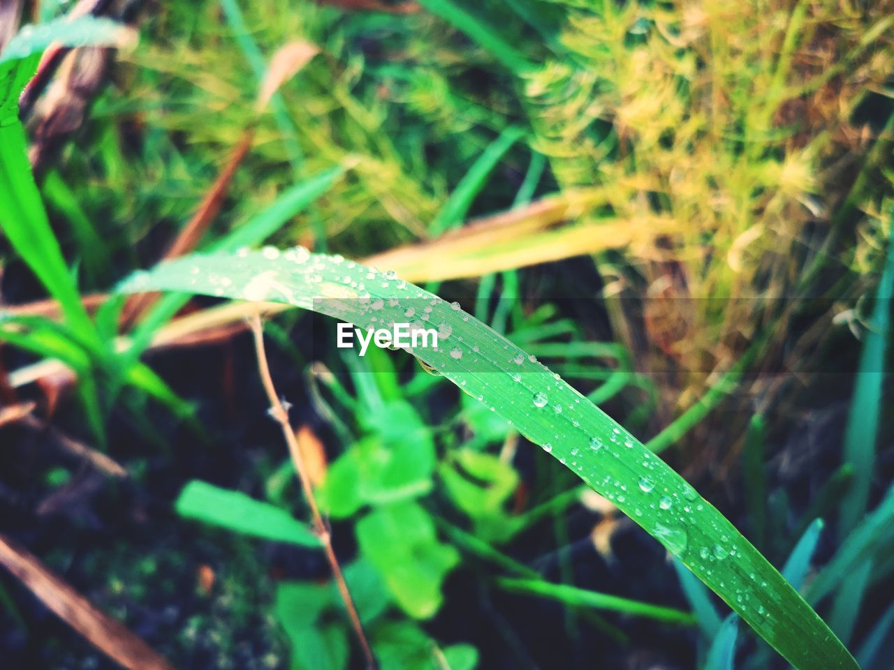 green color, plant, growth, water, wet, nature, drop, close-up, leaf, plant part, grass, blade of grass, no people, day, animals in the wild, one animal, animal themes, animal wildlife, outdoors, dew, rain, raindrop, purity