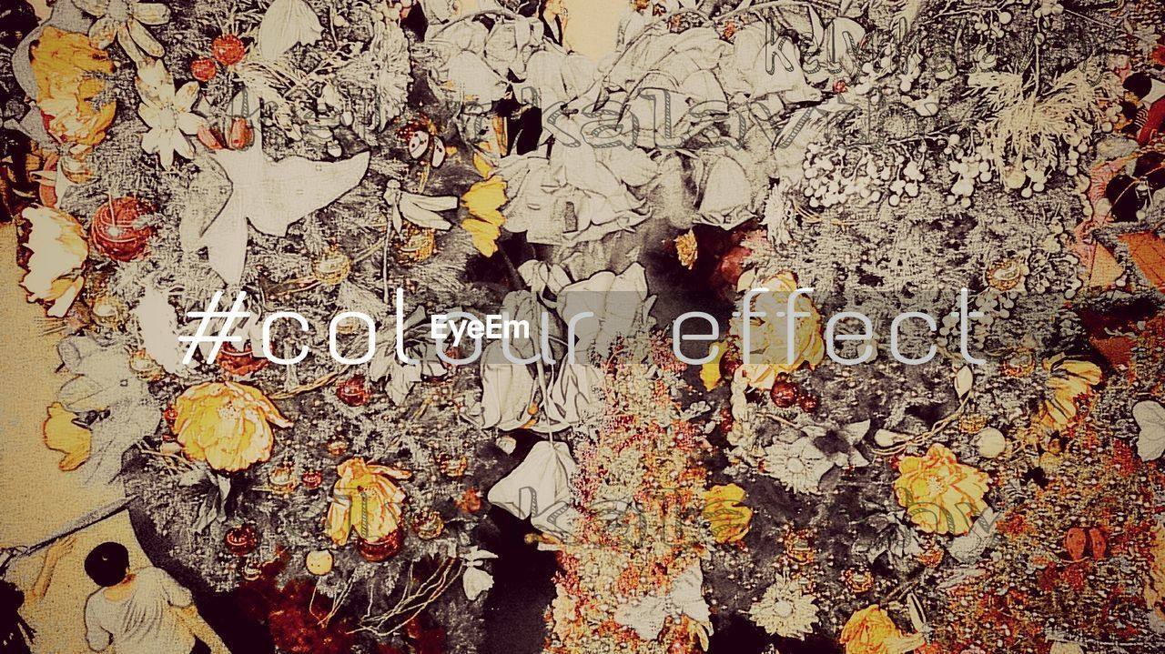 text, communication, leaf, no people, autumn, full frame, day, outdoors, close-up
