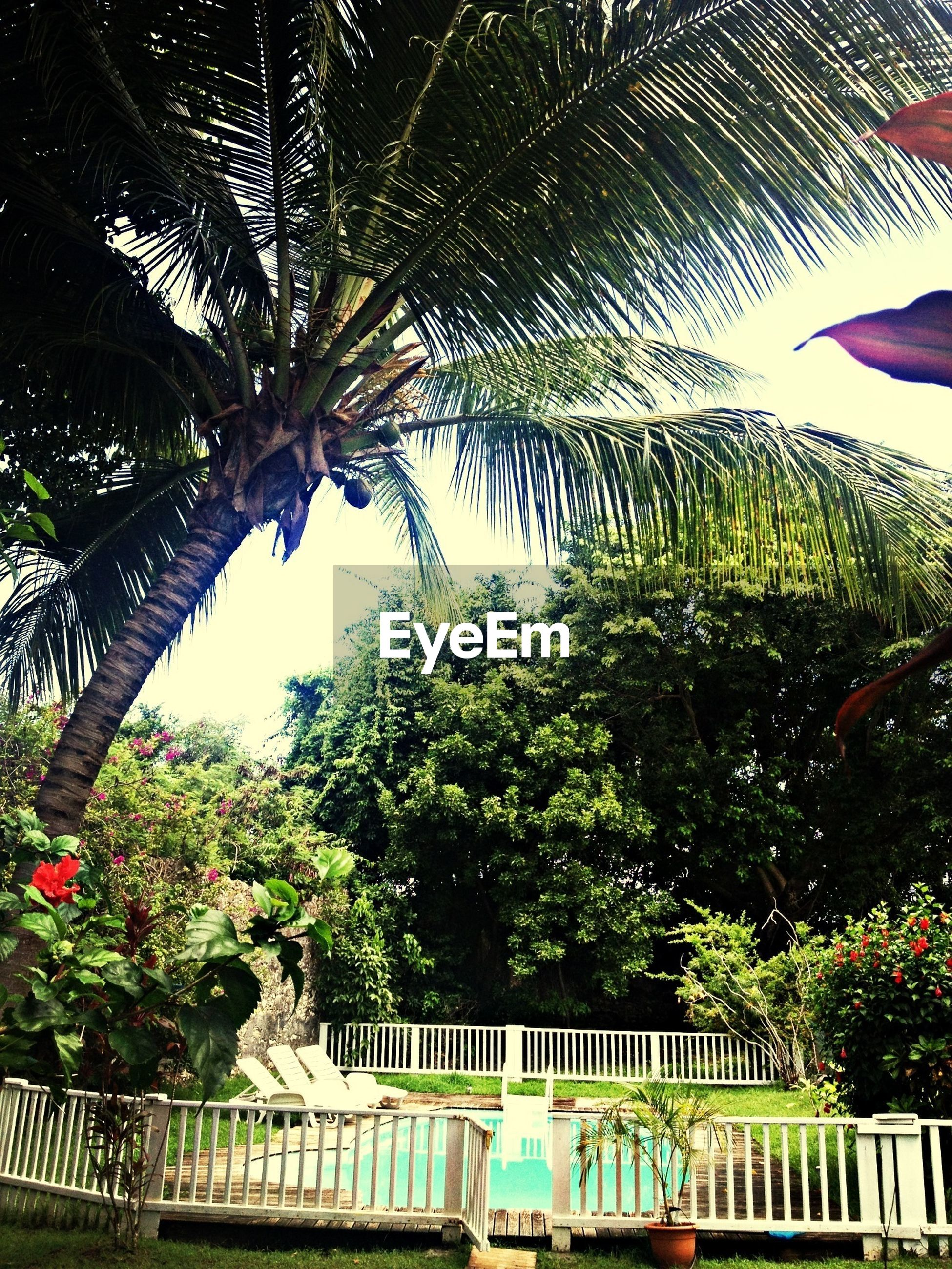 tree, railing, growth, sky, palm tree, nature, leisure activity, green color, lifestyles, park - man made space, plant, day, outdoors, branch, built structure, tranquility, relaxation, person