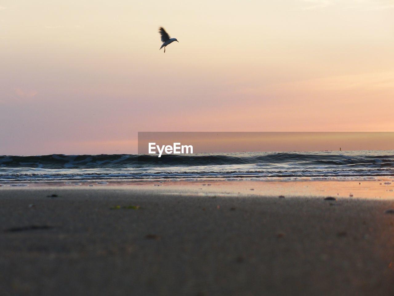 sea, animal themes, sunset, animal, beach, vertebrate, sky, bird, water, animals in the wild, land, animal wildlife, beauty in nature, flying, horizon over water, one animal, horizon, scenics - nature, wave, no people, outdoors