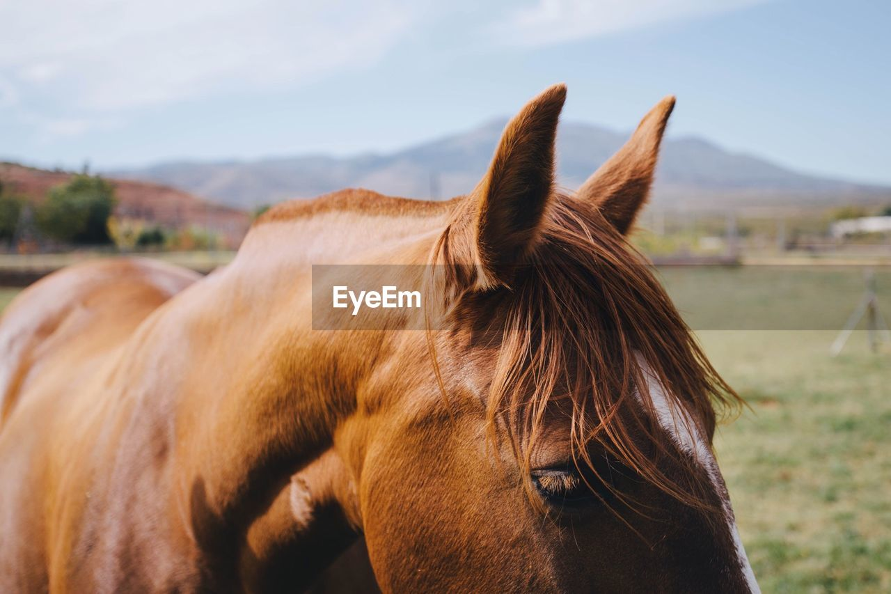 Cropped Image Of Brown Horse On Field