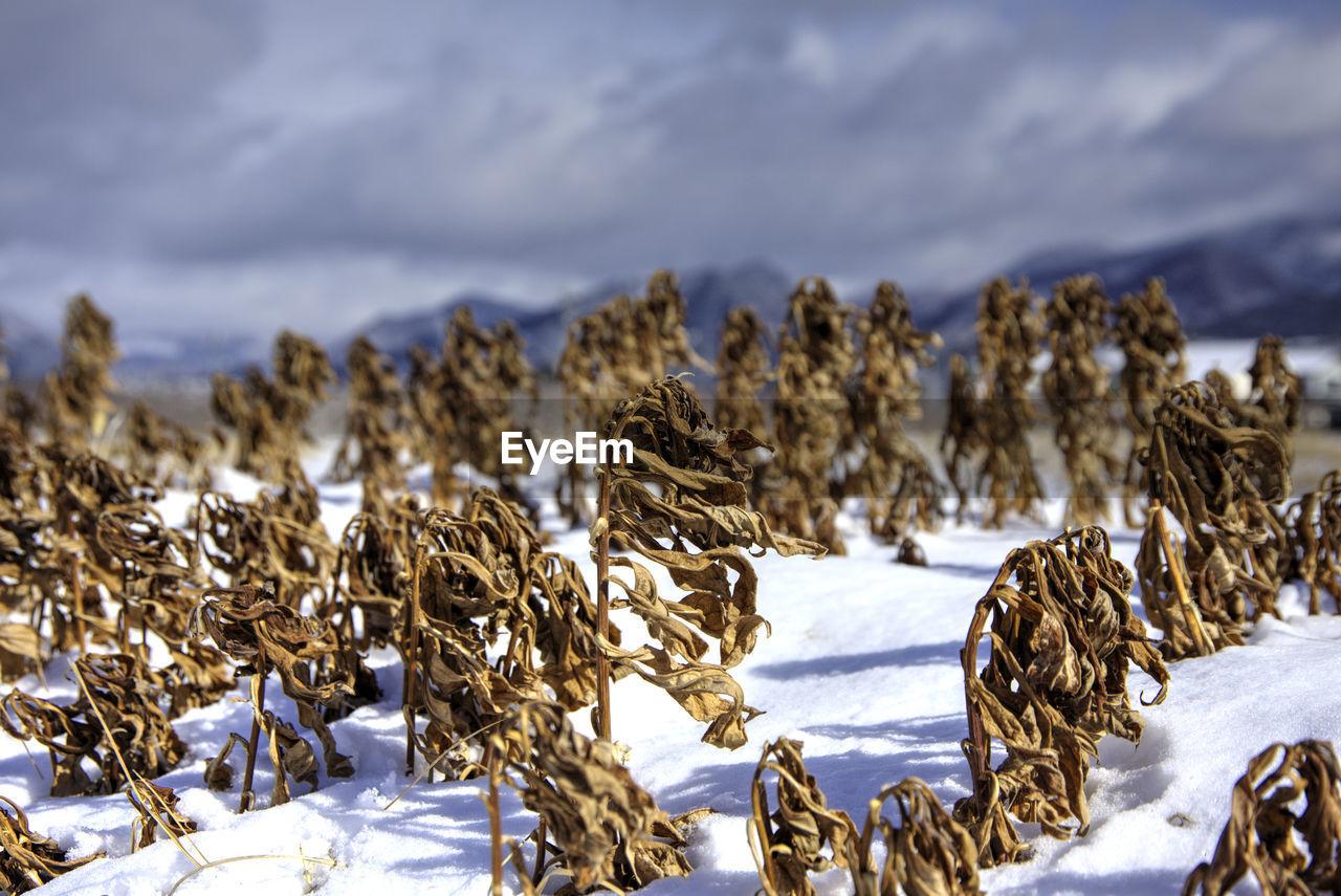 SNOW ON FIELD AGAINST SKY