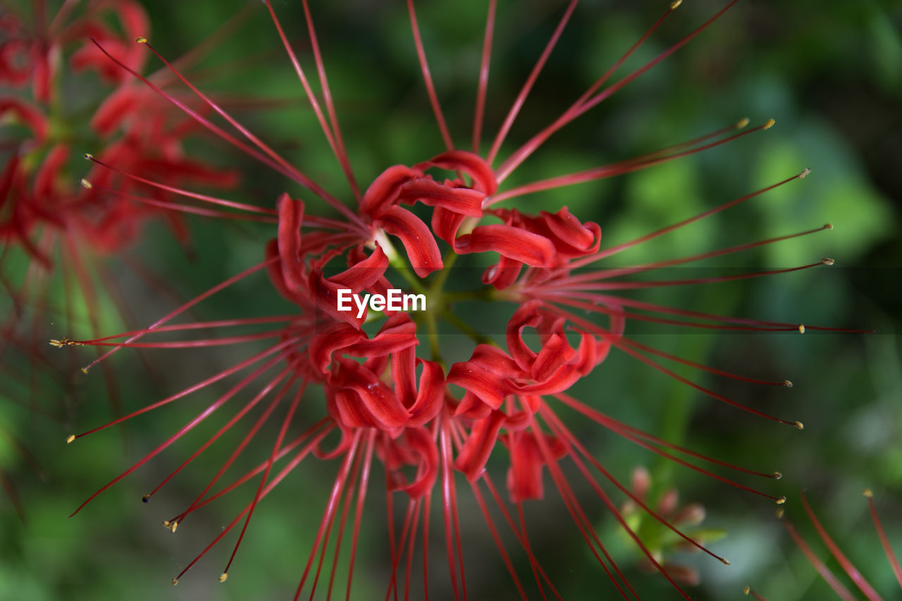 growth, nature, red, flower, plant, fragility, beauty in nature, no people, close-up, petal, day, freshness, outdoors, flower head