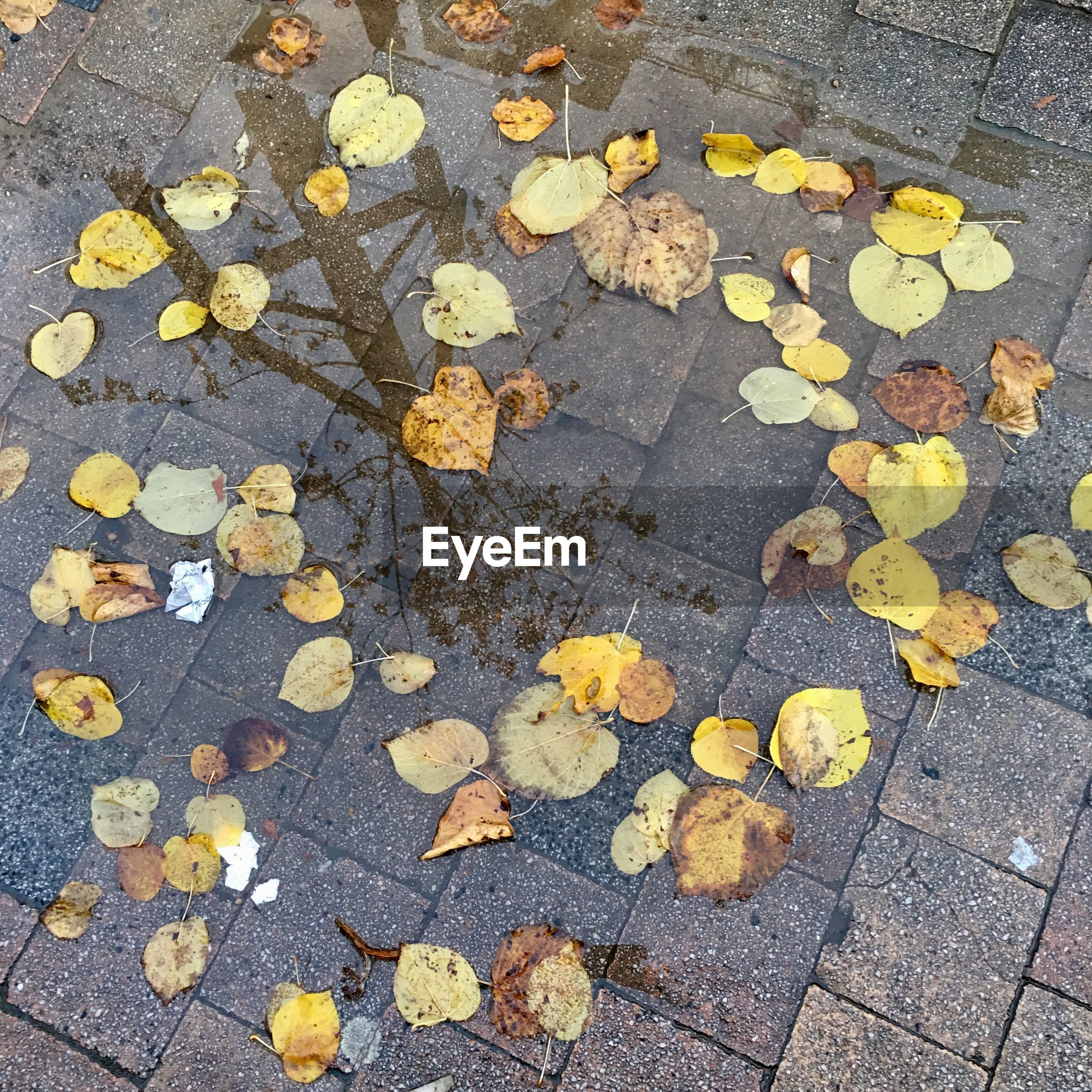 High angle view of autumn leaves fallen on footpath with puddle