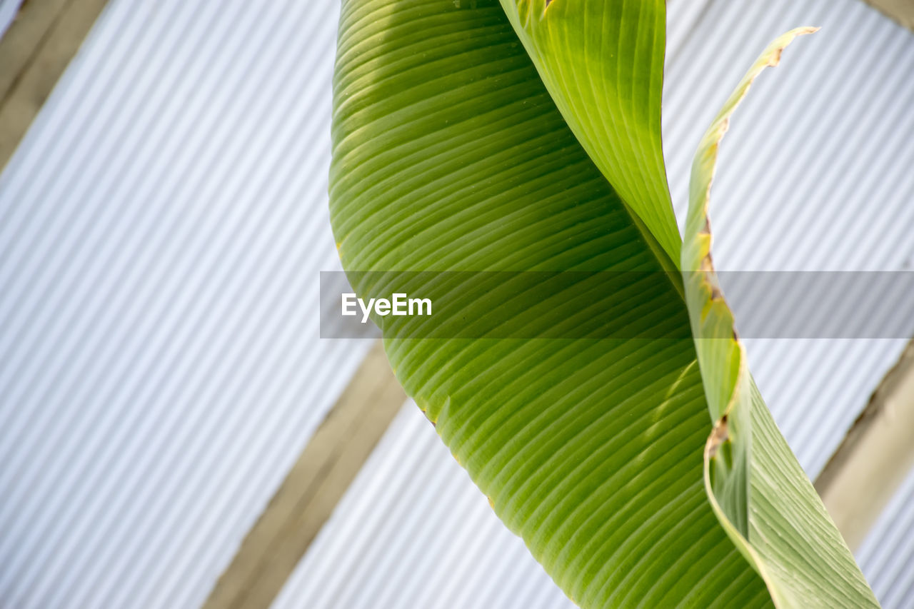 leaf, plant part, green color, plant, low angle view, no people, growth, nature, day, palm leaf, close-up, palm tree, pattern, tree, tropical climate, outdoors, natural pattern, freshness, beauty in nature, focus on foreground, leaves