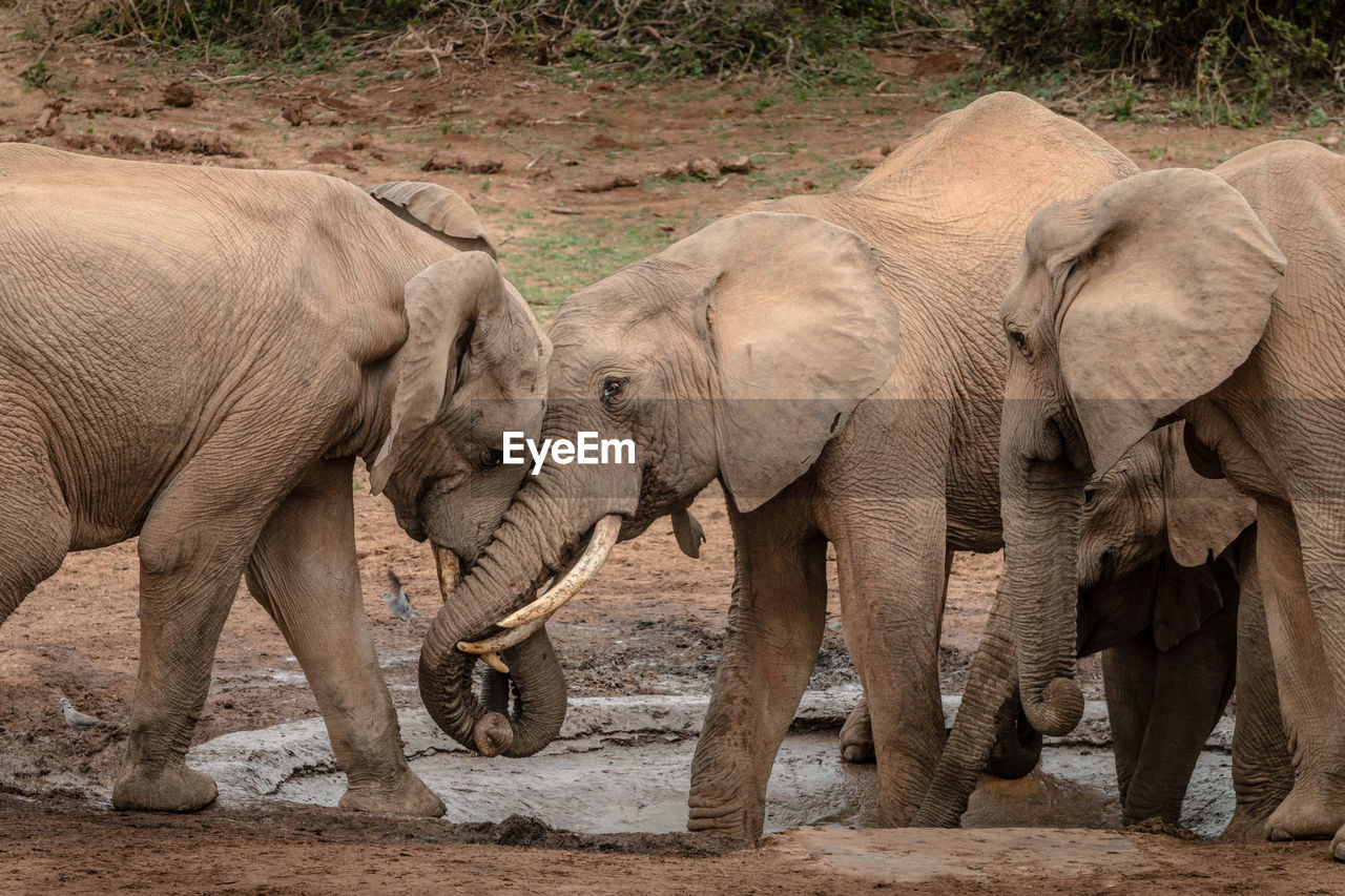 VIEW OF ELEPHANT IN ANIMAL
