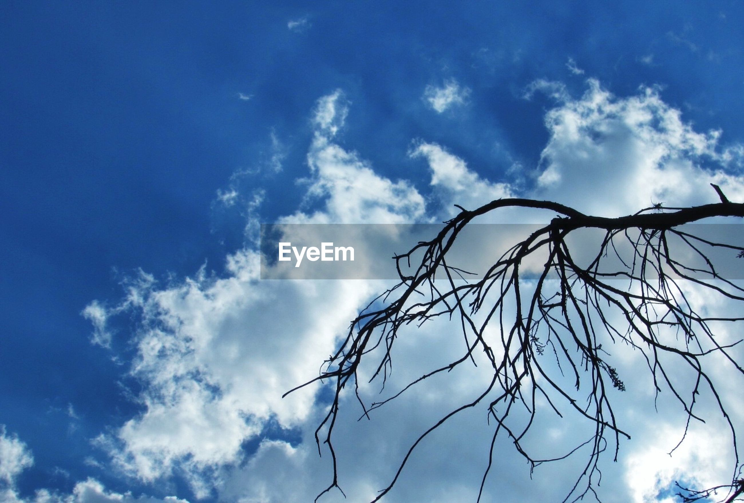 Low angle view of silhouette branch against cloudy sky