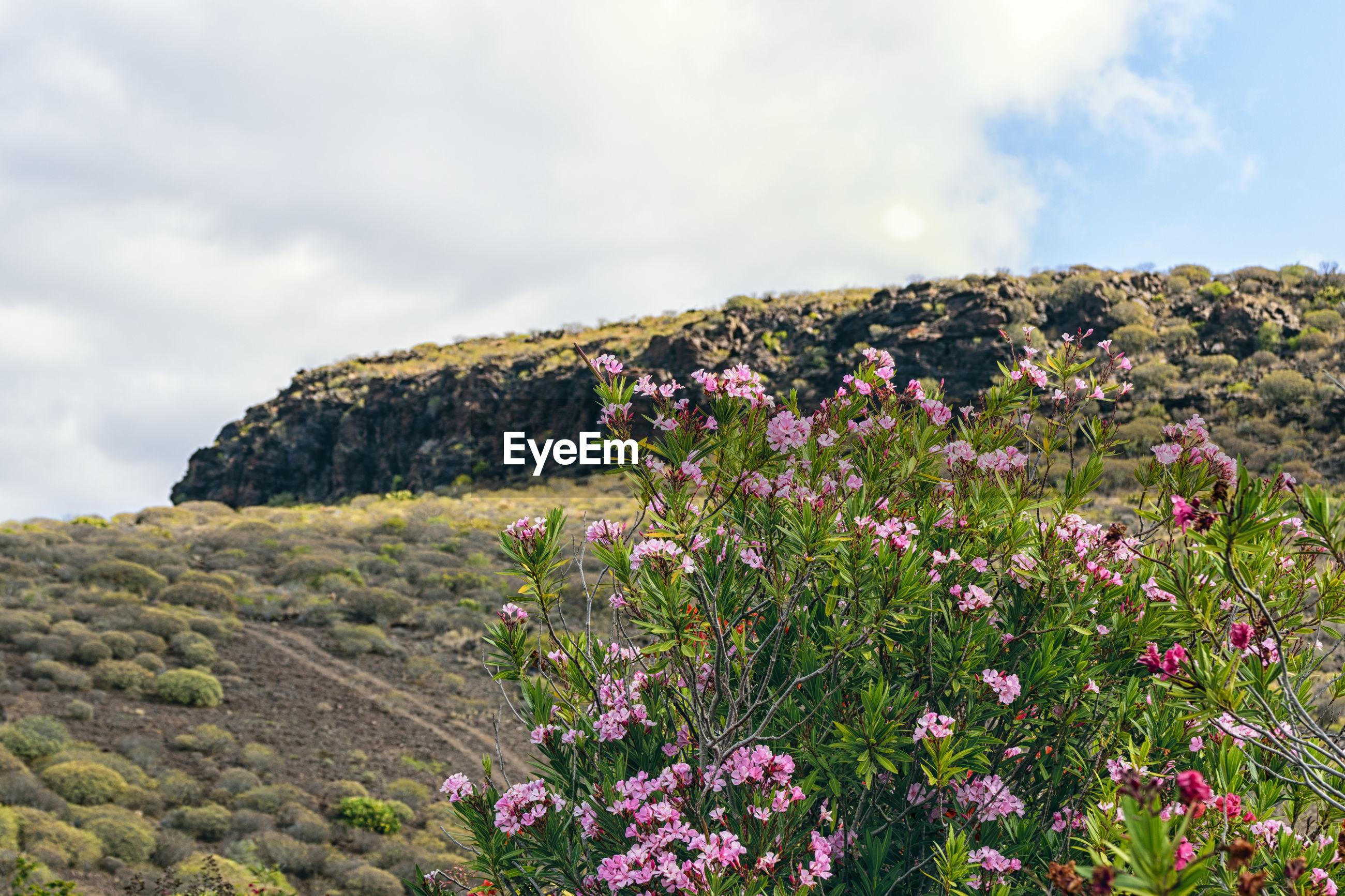 FLOWERS GROWING IN FIELD AGAINST SKY