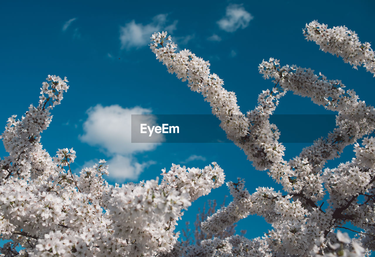 nature, blue, sky, day, no people, beauty in nature, white color, cloud - sky, low angle view, sunlight, growth, outdoors, plant, cold temperature, fragility, tranquility, close-up, snow, vulnerability, scenics - nature