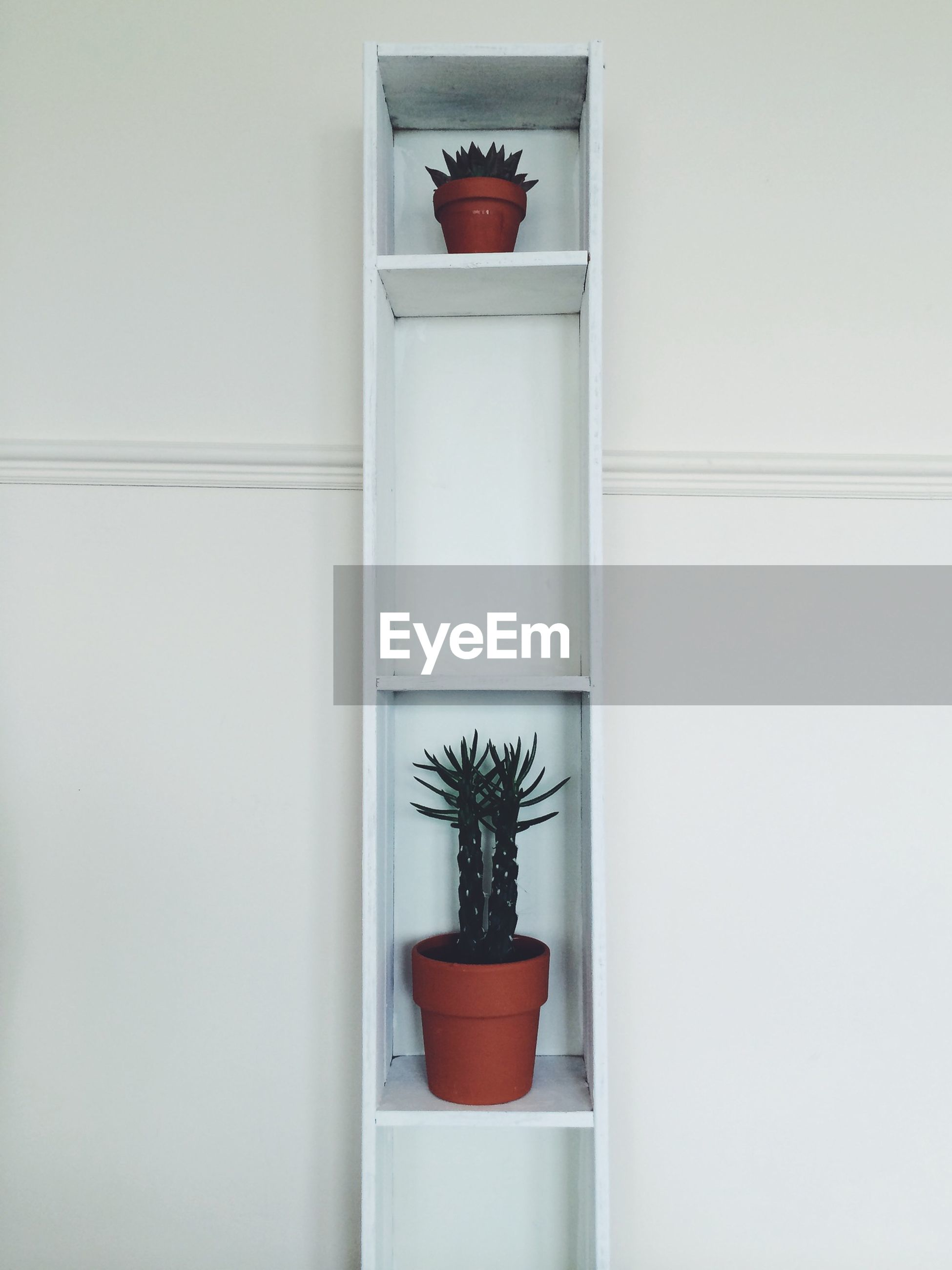 indoors, wall - building feature, potted plant, wall, plant, window, flower, red, window sill, home interior, vase, white color, simplicity, growth, no people, copy space, house, flower pot, built structure, close-up