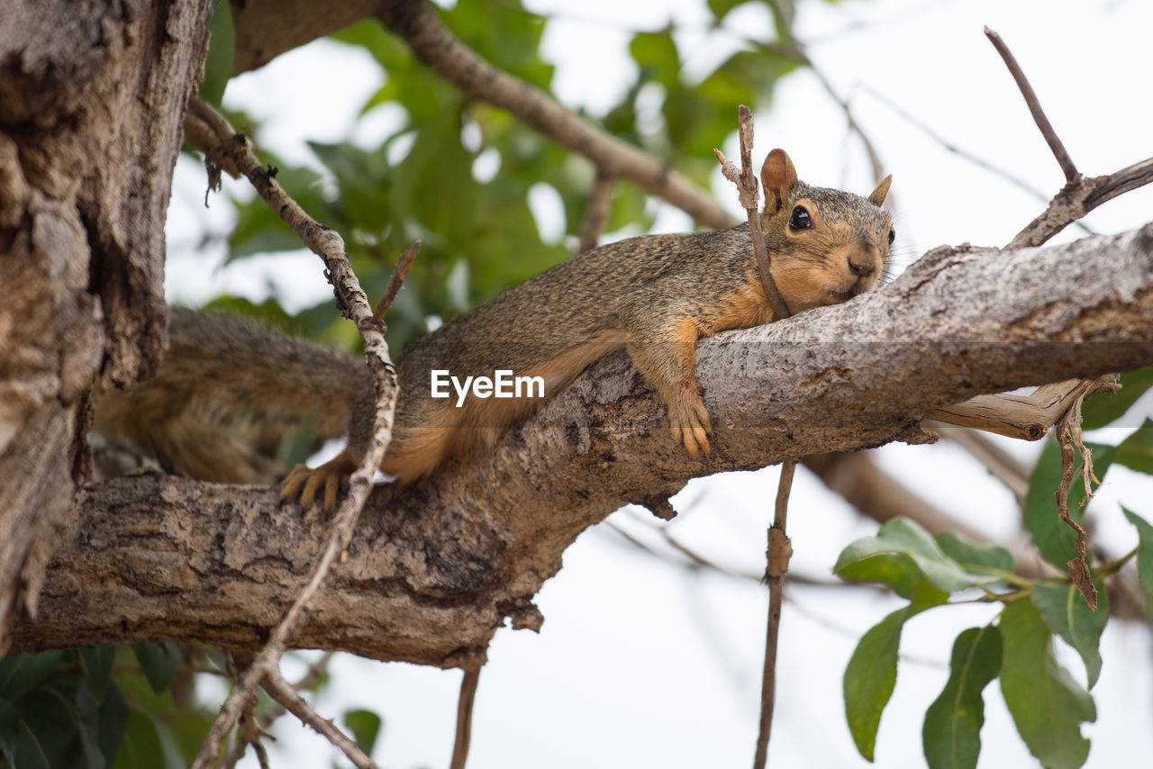 animal themes, animal, animal wildlife, animals in the wild, mammal, tree, branch, one animal, squirrel, vertebrate, rodent, plant, focus on foreground, low angle view, no people, nature, day, tree trunk, trunk, outdoors, whisker