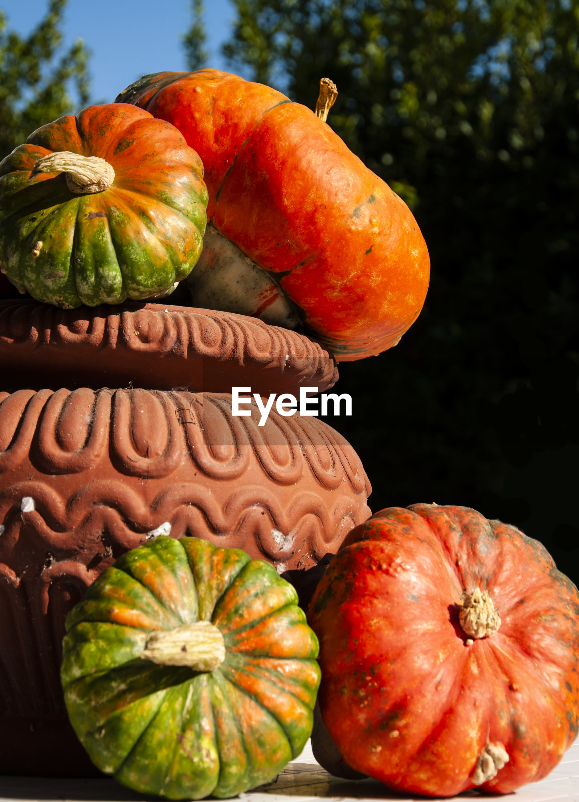 CLOSE-UP OF PUMPKINS IN CONTAINER