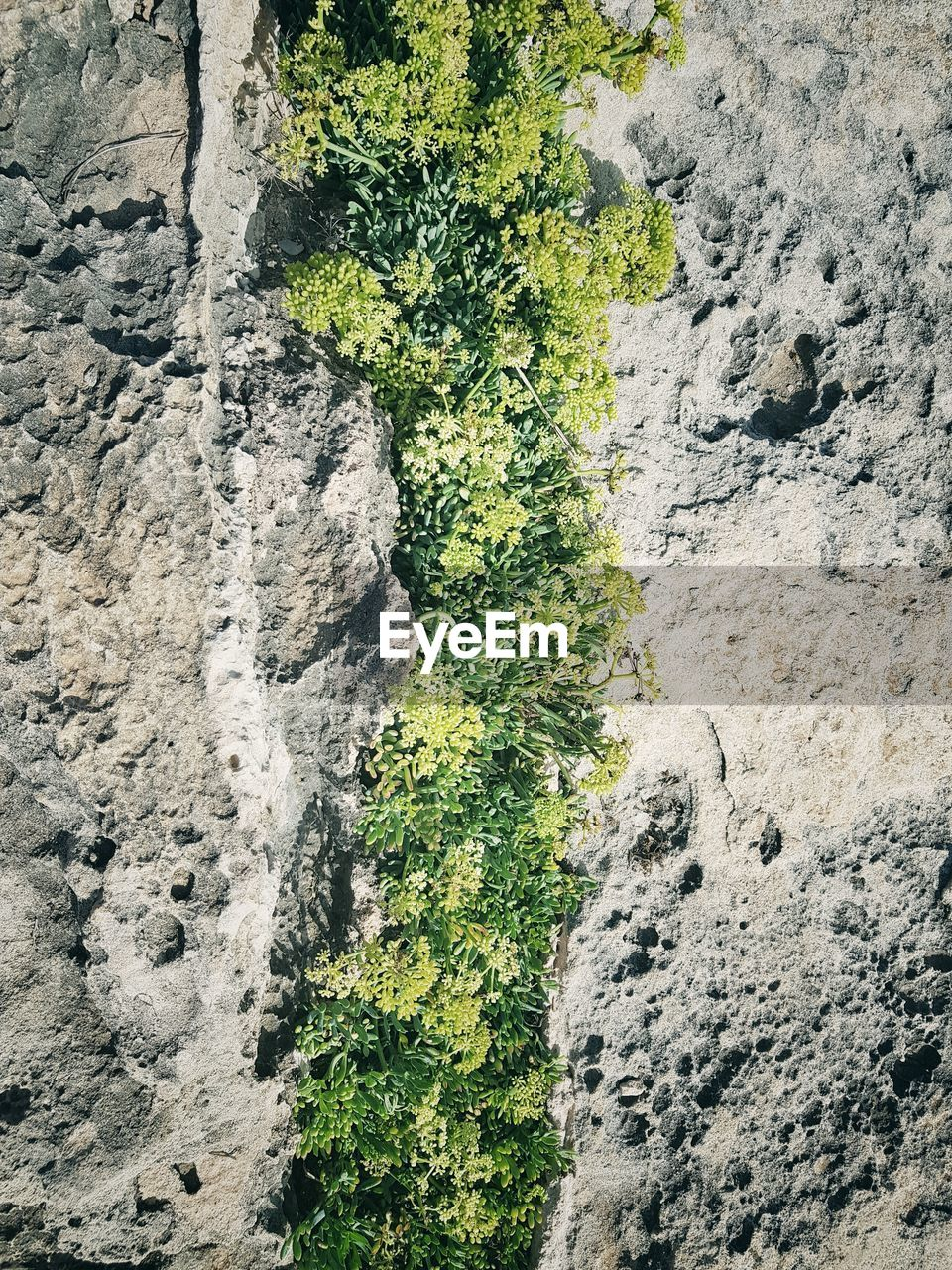 High angle view of plants growing on rock formations during sunny day