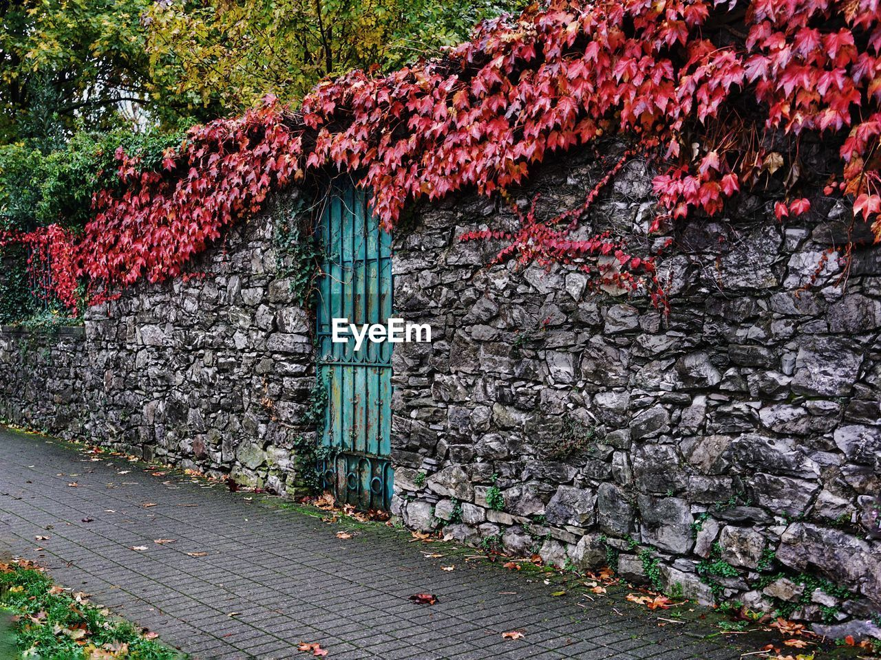 architecture, built structure, plant, building exterior, no people, nature, day, wall - building feature, tree, wall, leaf, building, plant part, red, ivy, autumn, growth, footpath, outdoors, flower, stone wall