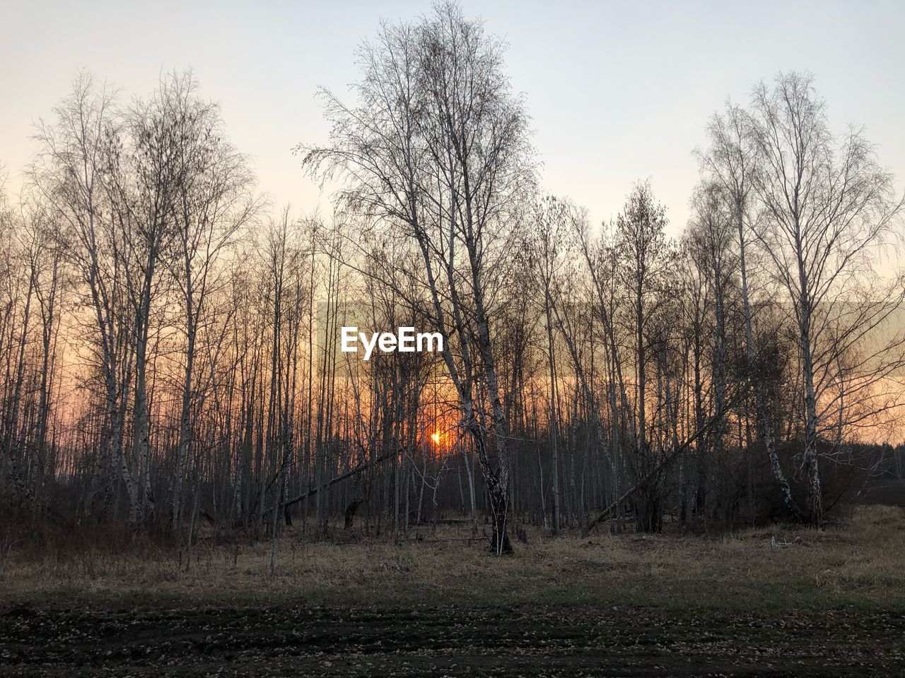 tree, plant, sky, land, bare tree, nature, forest, no people, tranquility, outdoors, sunset, scenics - nature, field, environment, non-urban scene, tranquil scene, woodland, landscape, beauty in nature, orange color