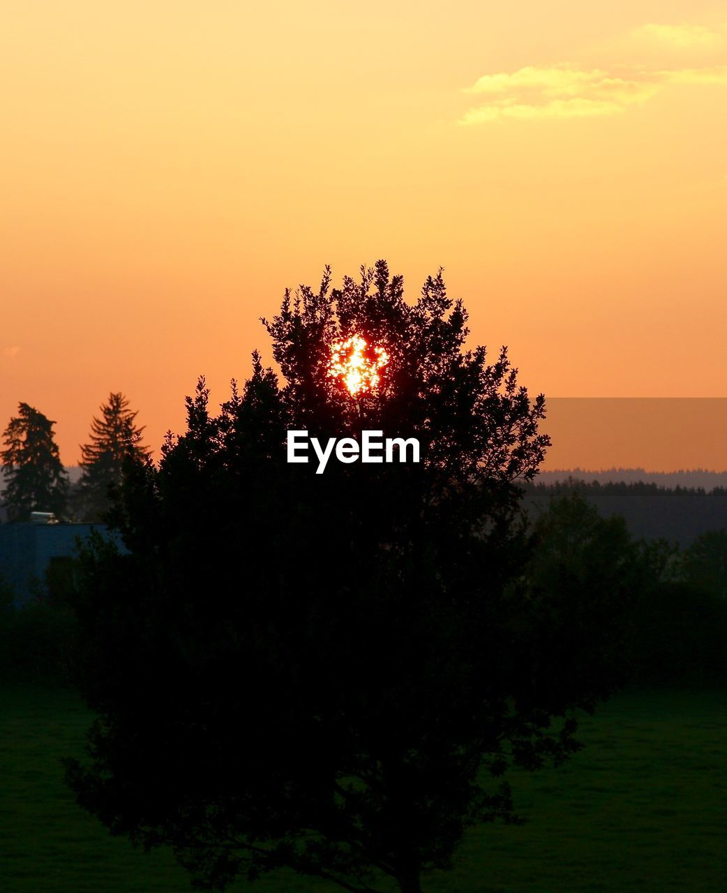 tree, sunset, nature, tranquil scene, scenics, silhouette, beauty in nature, orange color, tranquility, growth, no people, sky, outdoors, landscape, clear sky, day