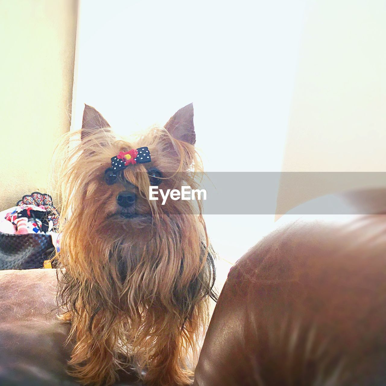 domestic animals, pets, one animal, animal themes, dog, mammal, day, close-up, no people, indoors