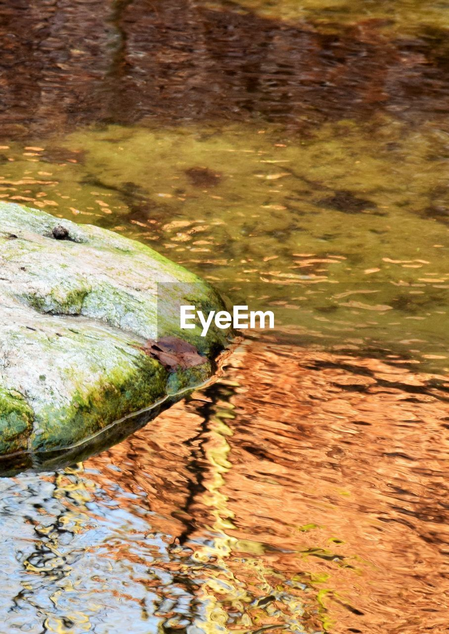 water, nature, lake, no people, day, rock, plant, solid, reflection, rock - object, outdoors, animals in the wild, reptile, high angle view, moss, animal wildlife, sunlight, stream - flowing water, flowing water, shallow