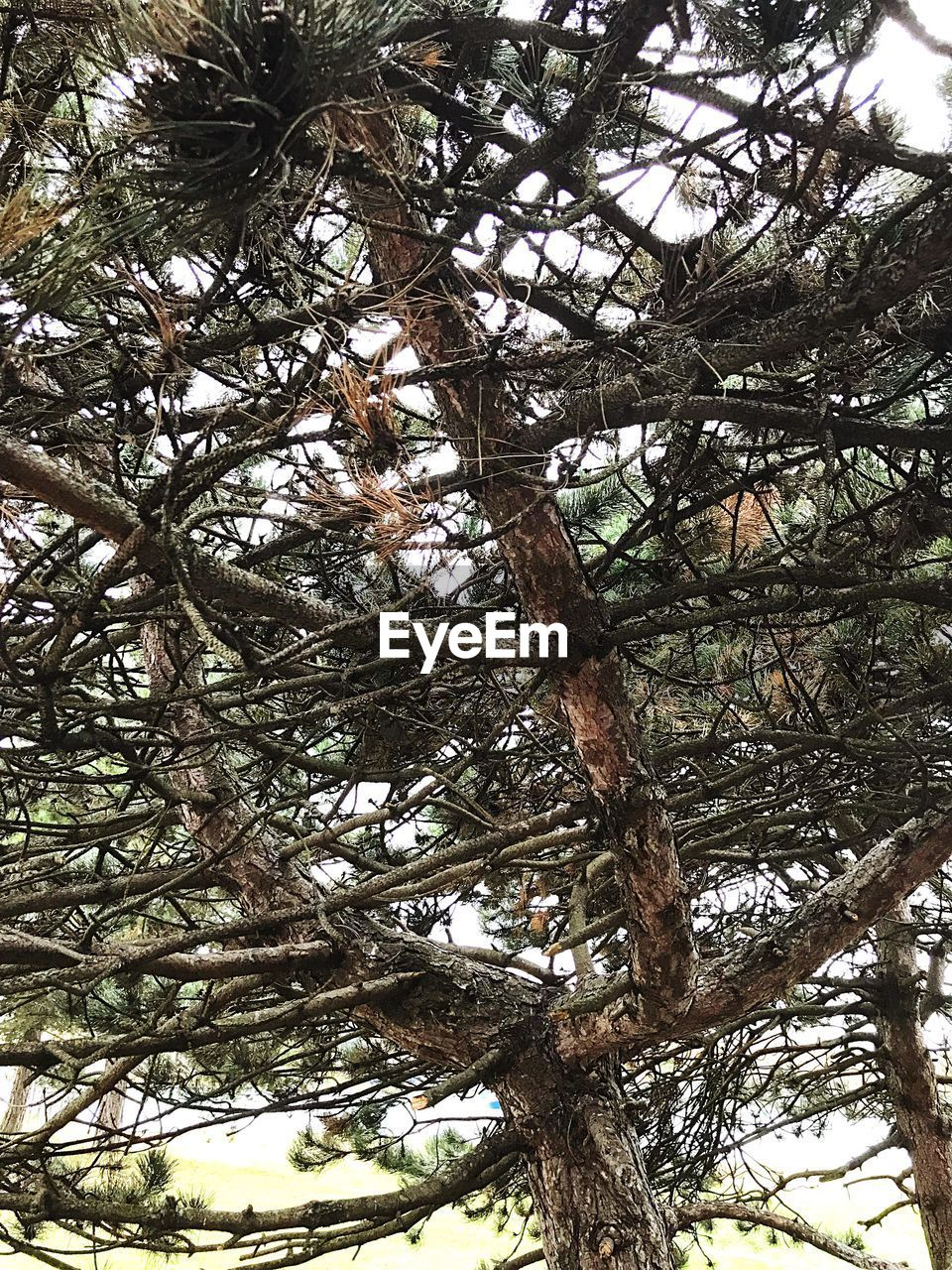 tree, low angle view, branch, nature, tree trunk, day, no people, growth, beauty in nature, outdoors, forest, sky, close-up