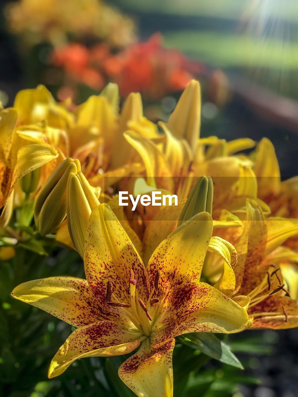 beauty in nature, growth, plant, close-up, flower, flowering plant, yellow, fragility, vulnerability, focus on foreground, nature, petal, freshness, day, flower head, inflorescence, no people, leaf, plant part, selective focus, outdoors, pollen
