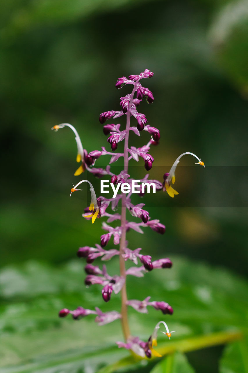 plant, growth, beauty in nature, flowering plant, flower, vulnerability, freshness, fragility, focus on foreground, nature, no people, selective focus, close-up, day, petal, green color, outdoors, purple, inflorescence, flower head