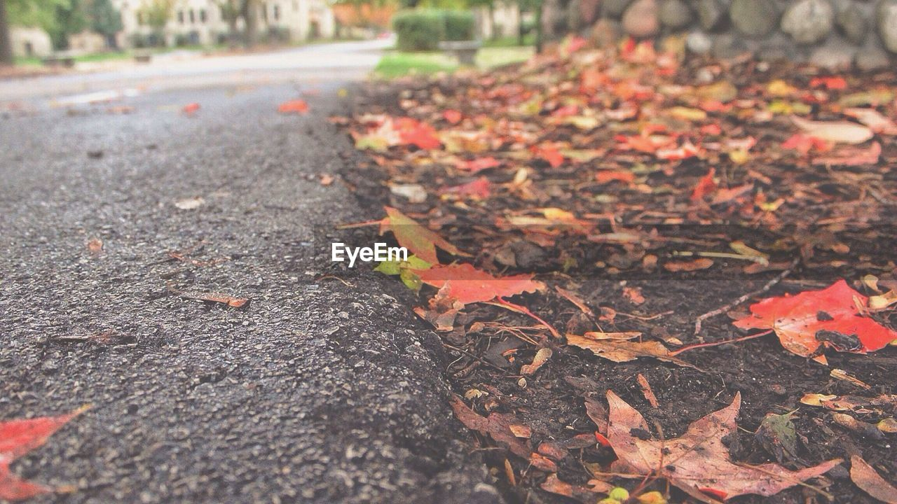 leaf, autumn, change, leaves, nature, outdoors, day, no people, fallen, maple leaf, tranquility, beauty in nature, maple, close-up, tree
