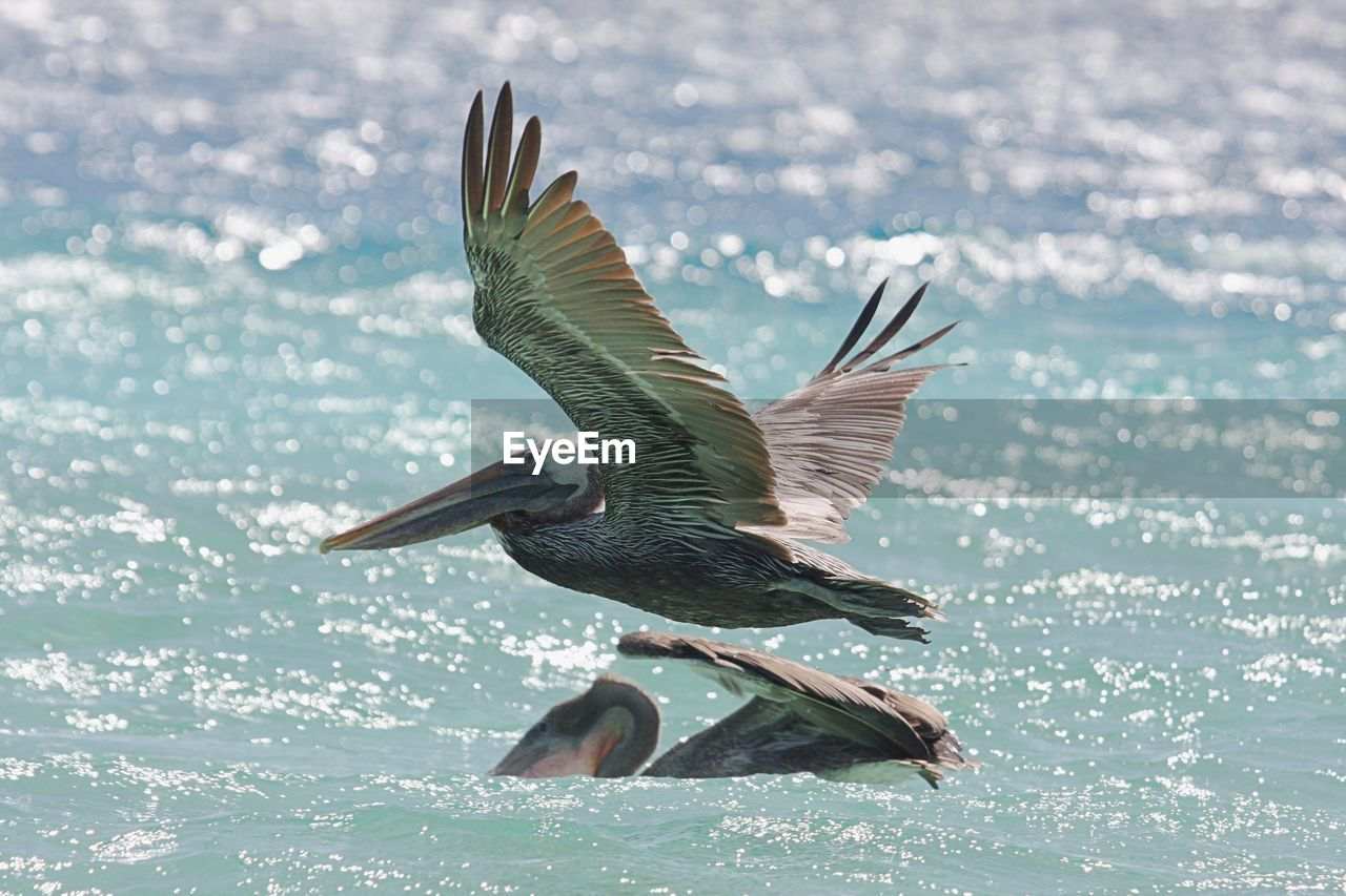 Close-Up Of Bird Flying Over Sea