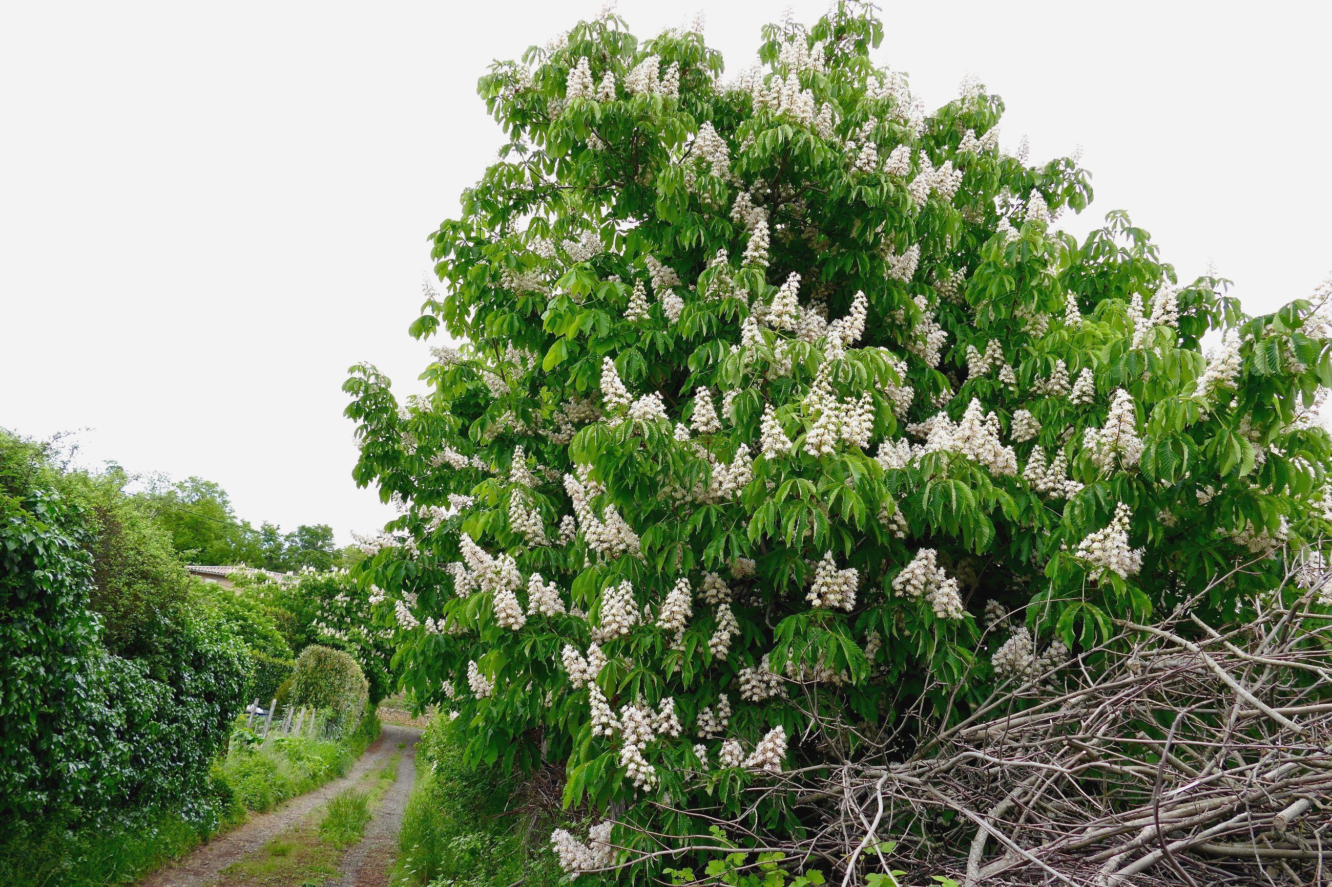 Flowering tree on field against sky