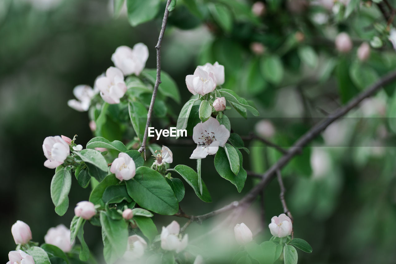 flower, plant, flowering plant, growth, beauty in nature, freshness, vulnerability, fragility, close-up, focus on foreground, nature, petal, day, plant part, flower head, leaf, no people, inflorescence, tree, selective focus, outdoors, springtime