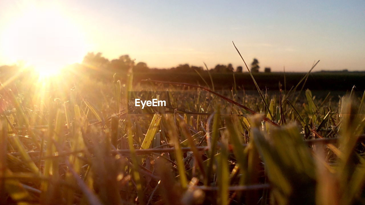 nature, growth, field, sunset, sunlight, outdoors, beauty in nature, sun, tranquility, no people, plant, tranquil scene, grass, close-up, day, sky, scenics, freshness