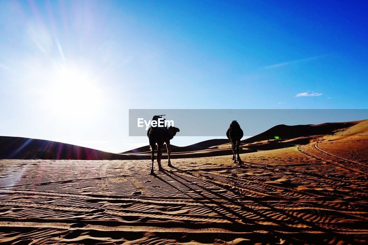 sky, sunlight, real people, nature, sun, land, sand, lifestyles, blue, day, one person, scenics - nature, beauty in nature, desert, lens flare, landscape, men, leisure activity, sunbeam, outdoors, riding, arid climate