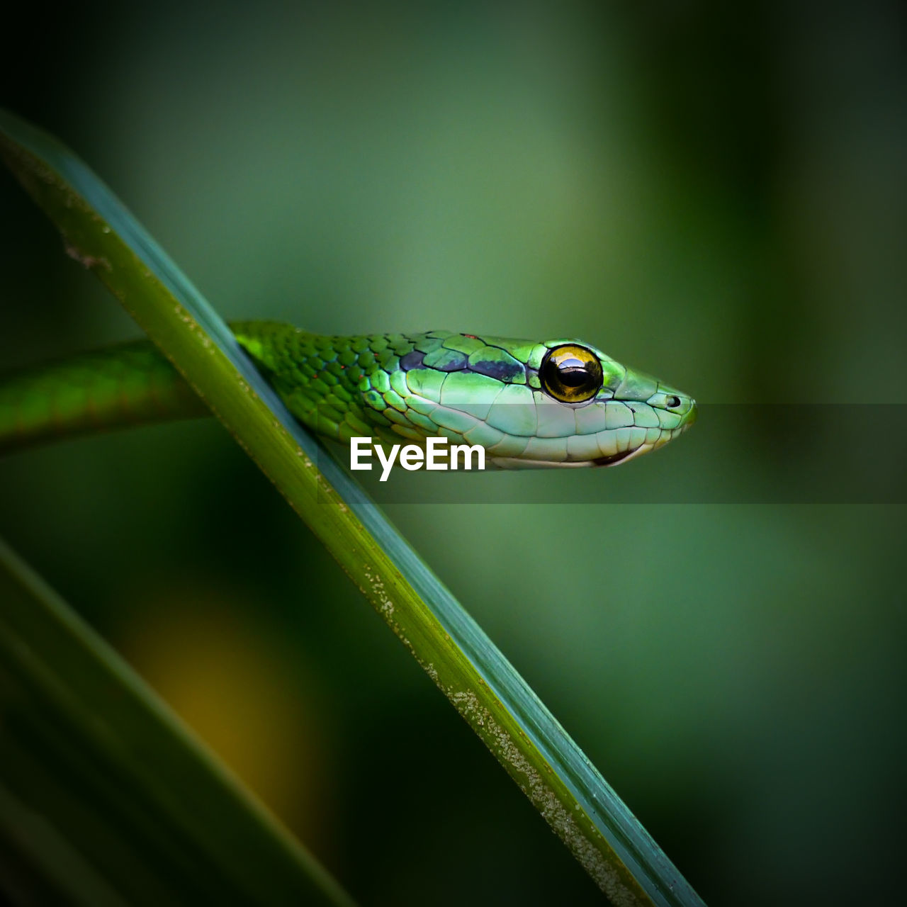 Close-up of snake on green leaf