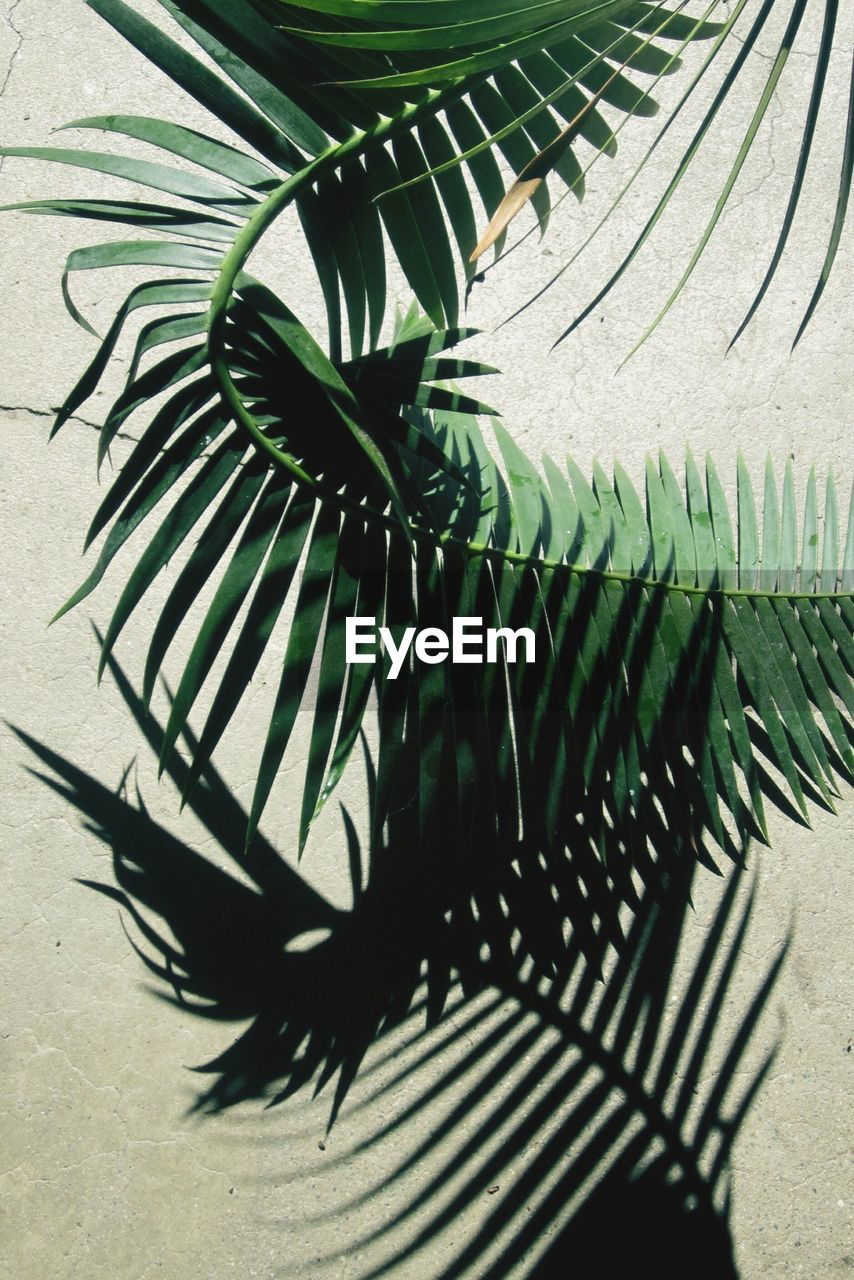 High Angle View Of Palm Leaf