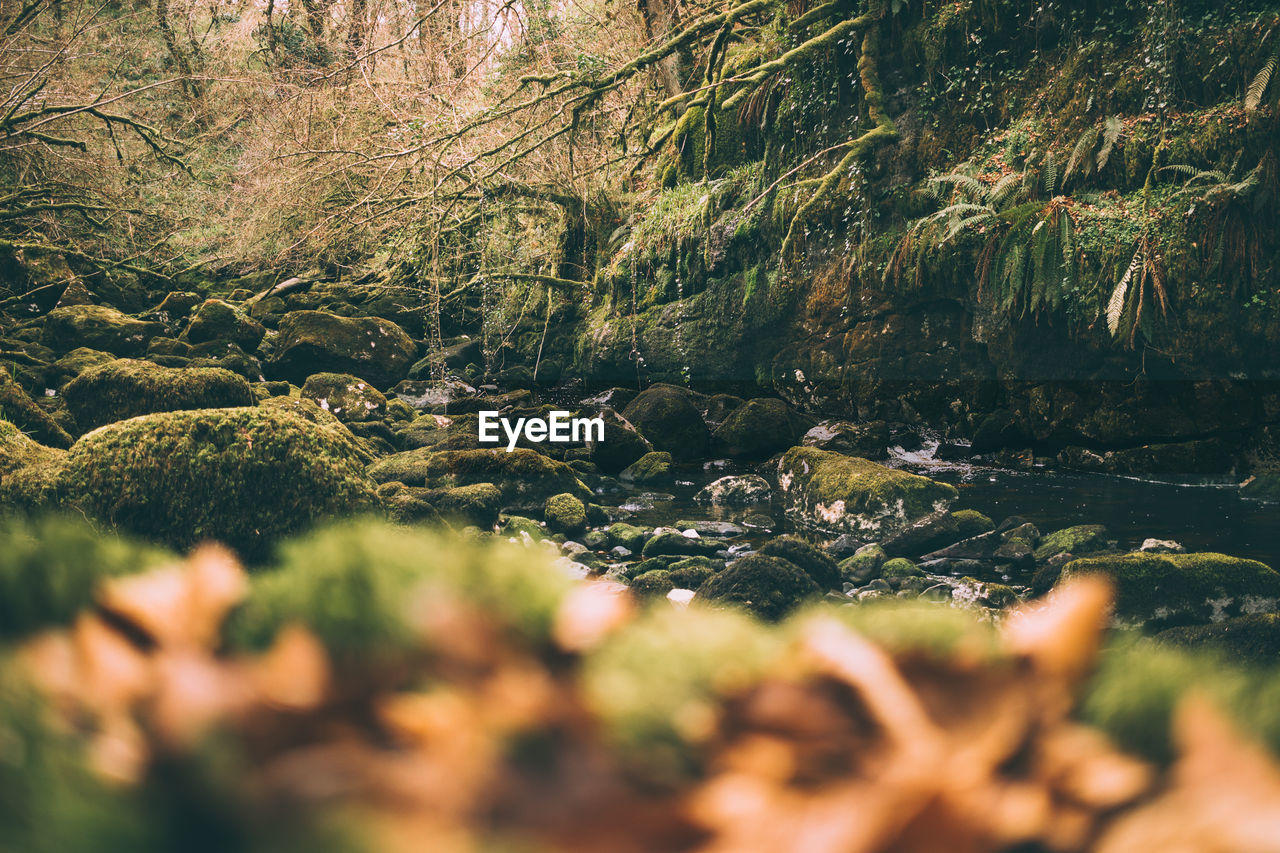 Stream In Forest In Uk