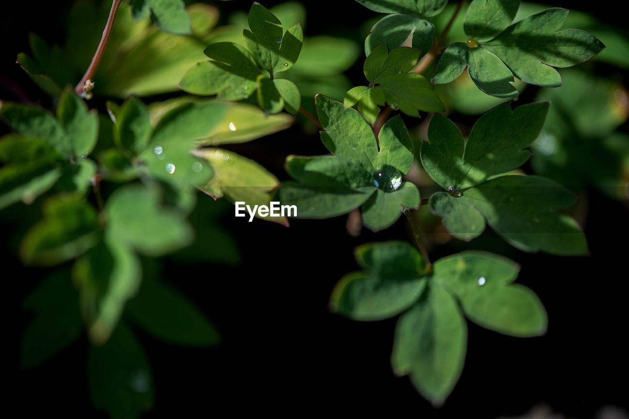 plant part, leaf, growth, plant, green color, close-up, nature, beauty in nature, no people, day, selective focus, one animal, freshness, high angle view, outdoors, animals in the wild, animal wildlife, animal themes, drop, water