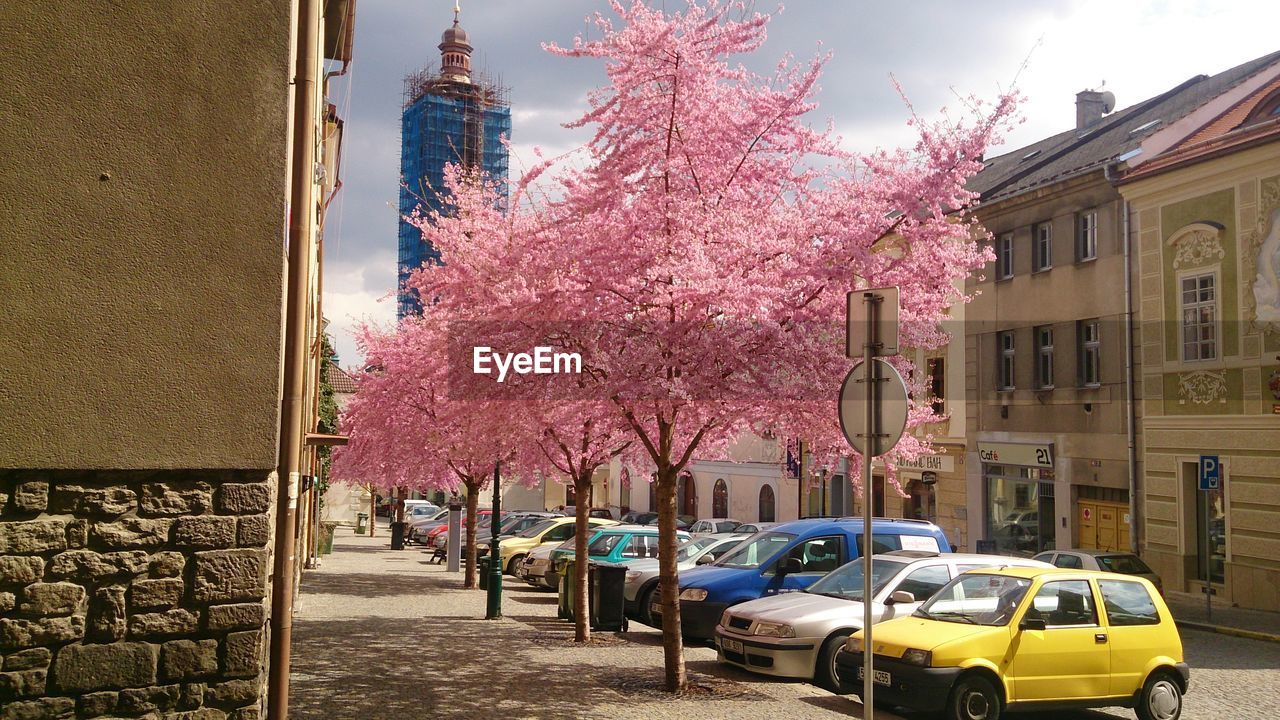Trees Blooming In The City