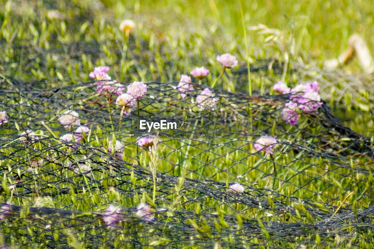 flower, growth, nature, plant, fragility, beauty in nature, grass, no people, freshness, blooming, outdoors, close-up, day