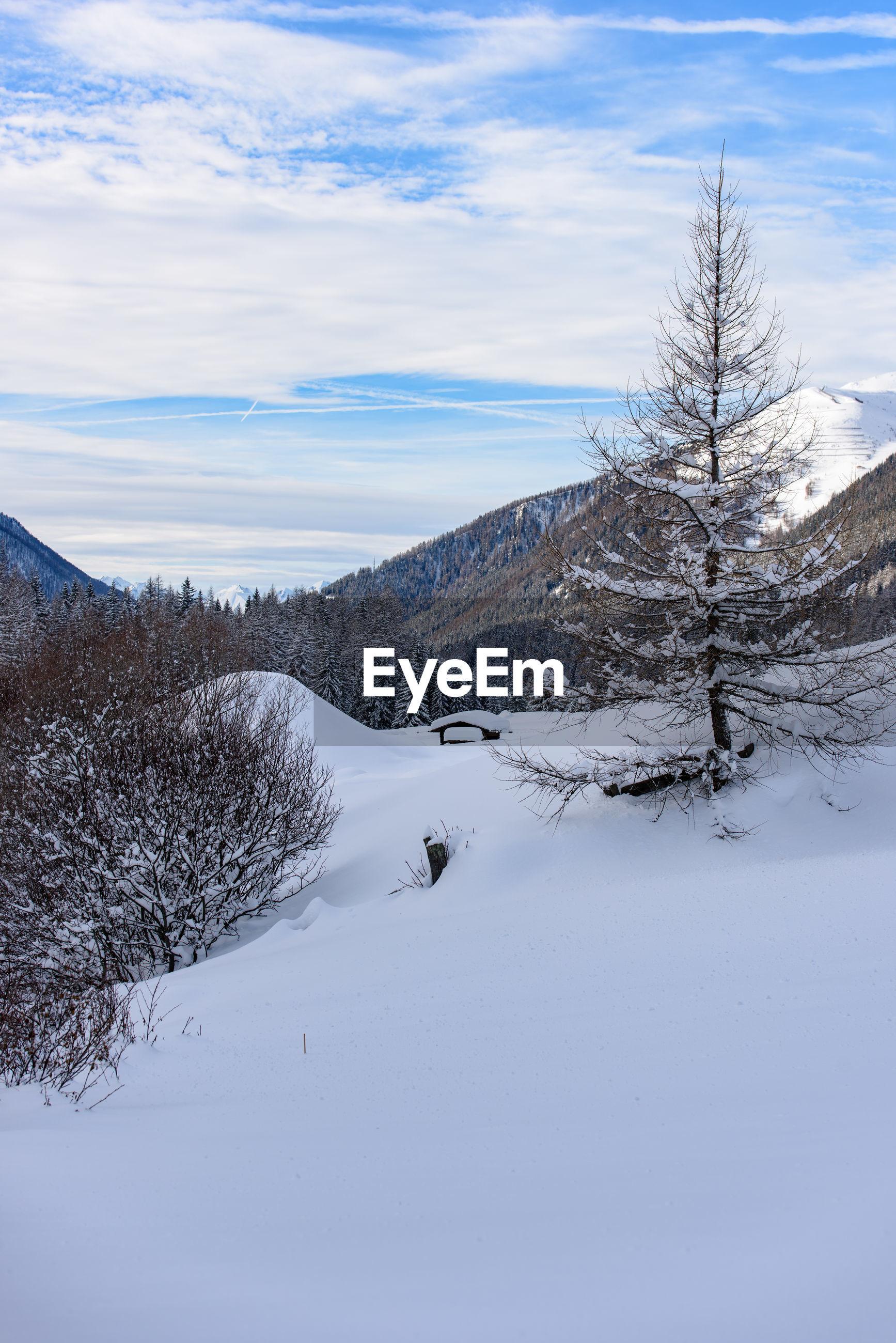 SNOWCAPPED TREE AGAINST SKY