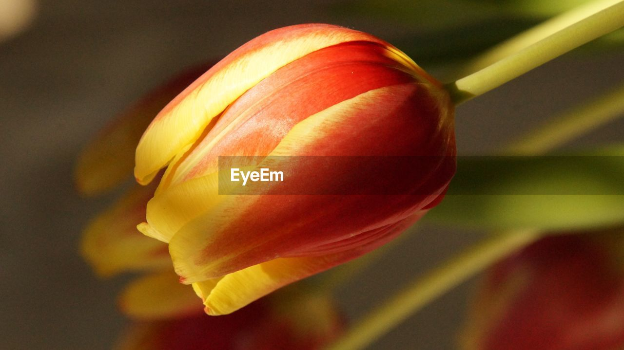 close-up, flower, freshness, nature, petal, no people, beauty in nature, fragility, flower head, day, outdoors