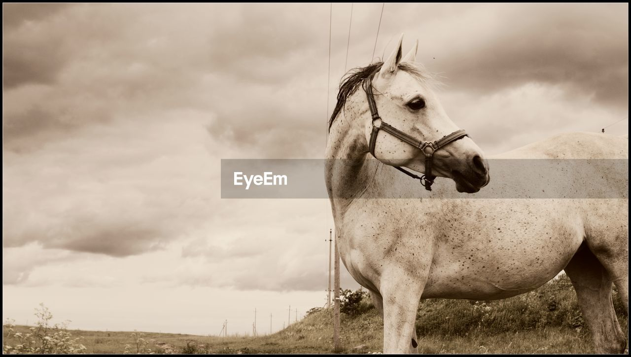 horse, domestic animals, animal themes, sky, one animal, mammal, cloud - sky, bridle, livestock, day, outdoors, field, standing, no people, nature, tree