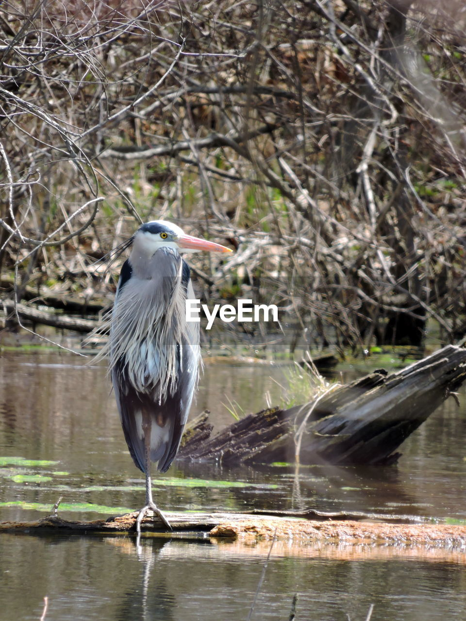 bird, animal themes, vertebrate, one animal, animals in the wild, animal, animal wildlife, perching, water, day, heron, nature, water bird, no people, focus on foreground, lake, tree, outdoors, gray heron, beak