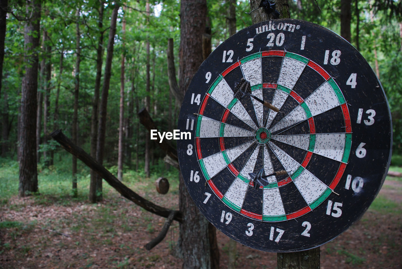 tree, land, forest, plant, day, shape, tree trunk, circle, focus on foreground, geometric shape, no people, trunk, nature, communication, wood - material, woodland, close-up, sign, sports target, outdoors