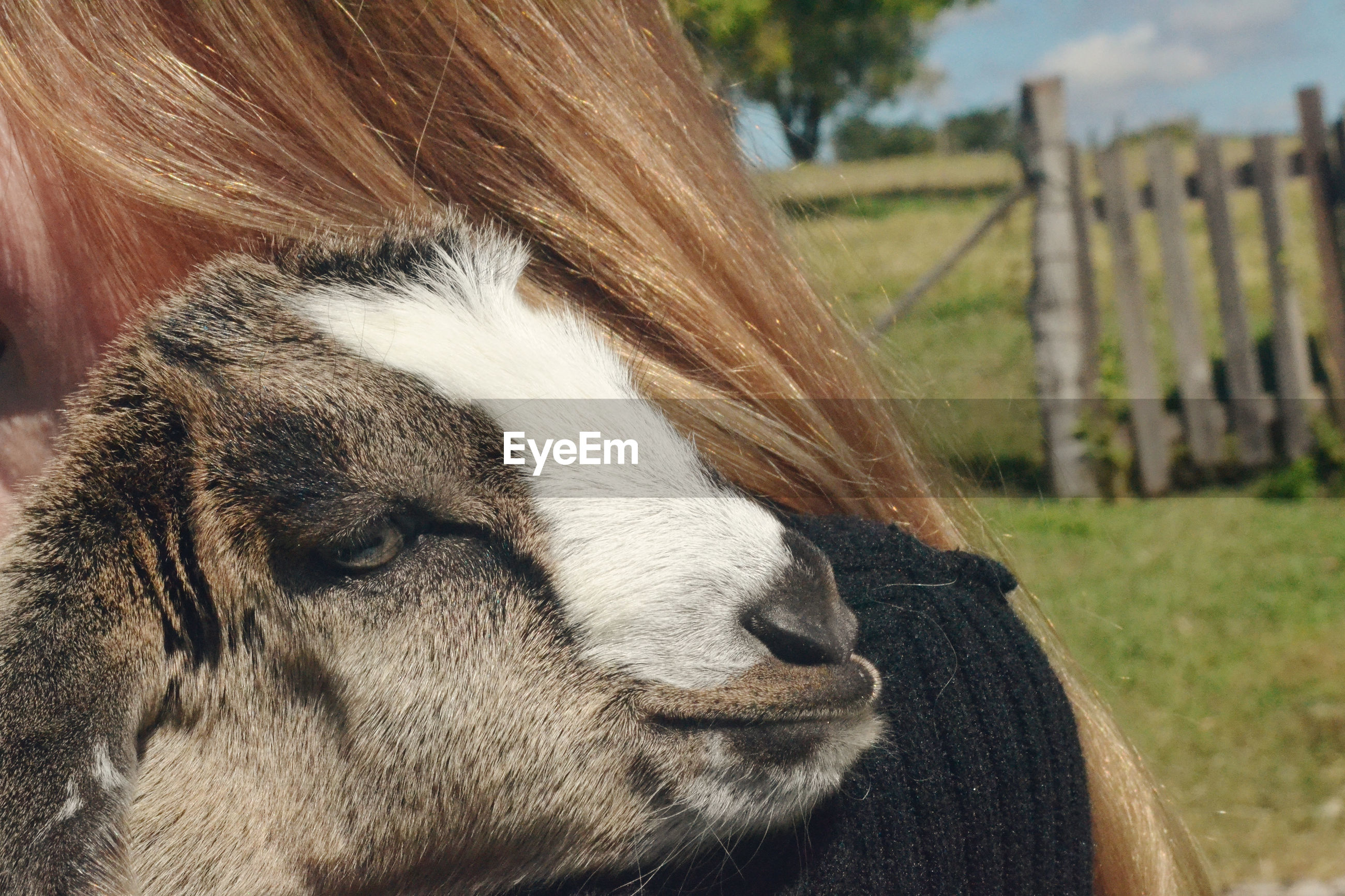 Close-up of woman with goat outdoors
