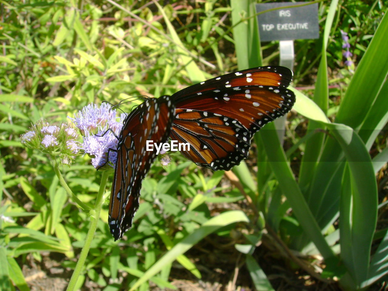 Close-up of butterfly on flowers in park