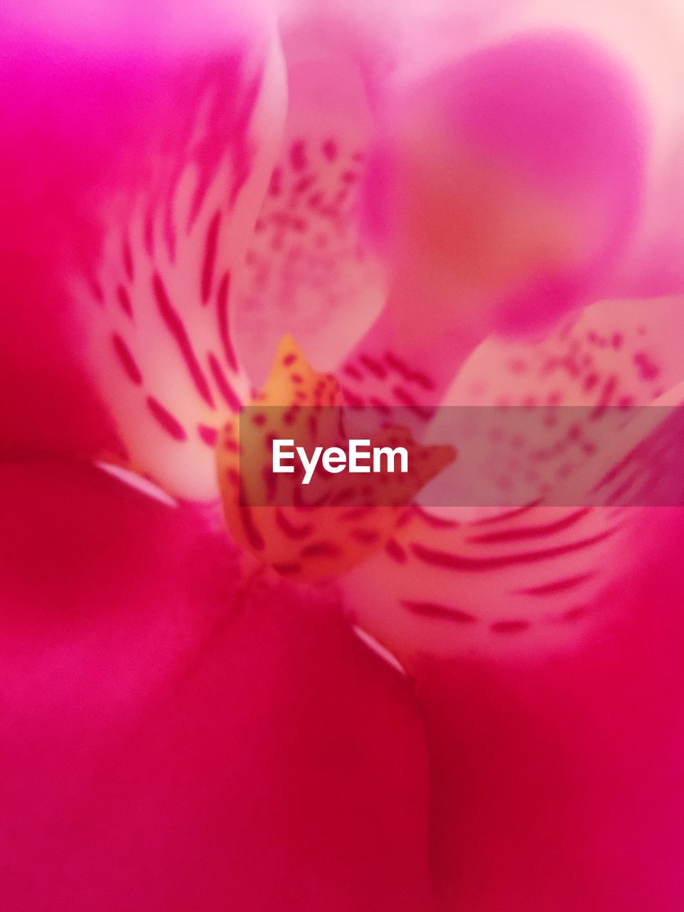 petal, flower, no people, close-up, beauty in nature, flower head, nature, day
