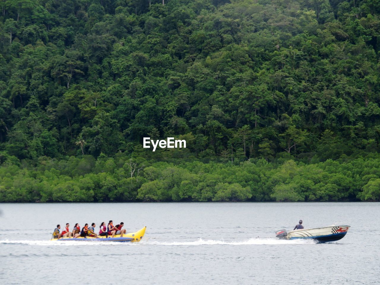 People kayaking in river against trees