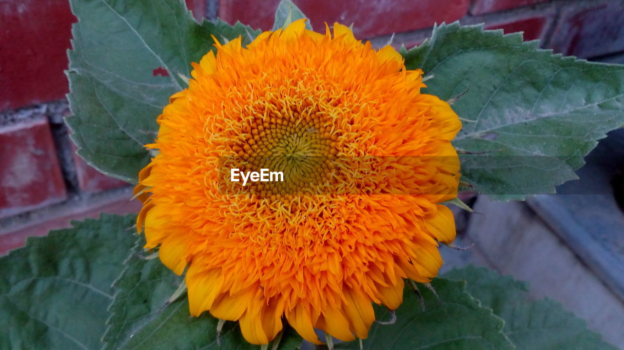 flower, fragility, petal, freshness, flower head, leaf, beauty in nature, plant, nature, growth, high angle view, day, close-up, no people, outdoors, blooming, yellow