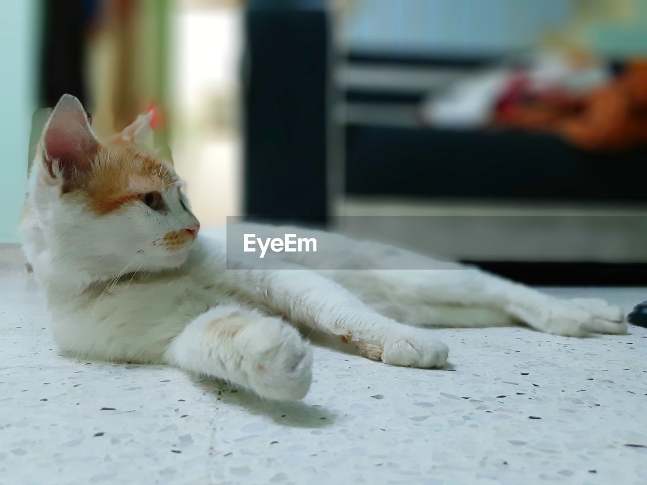 pets, domestic, domestic animals, animal, animal themes, mammal, one animal, domestic cat, cat, feline, vertebrate, white color, no people, relaxation, looking away, looking, focus on foreground, selective focus, indoors, lying down, whisker